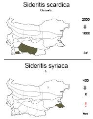 Sideritis