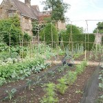A traditional walled vegetable garden produces a large range of vegetables! This course arose from meeting Bridget at the Walled Kitcehn Garden Network meeting at Croome last autumn: http://www.edimentals.com/blog/?page_id=2554