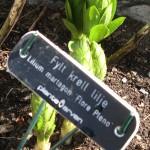 Plant Heritage ornamentals