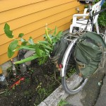 Green transport...one of those plants is Streptopus amplexifolius :)