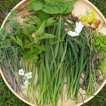 Ingredients to a salad with Allium validum