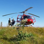 Angelica sylvestris (sløke) and Margrethe leaving us, hitching a lift on the helicopter