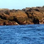 About 20 seals were resting on the rocks