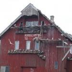 Kittiwakes/ Krykkje on Røst