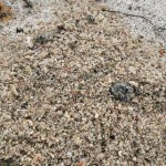 Shellsand beach