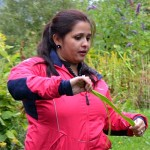 Sharmila gets acquainted with the Nepalese onion in Malvik...still a bit in disbelief that this is really happening!