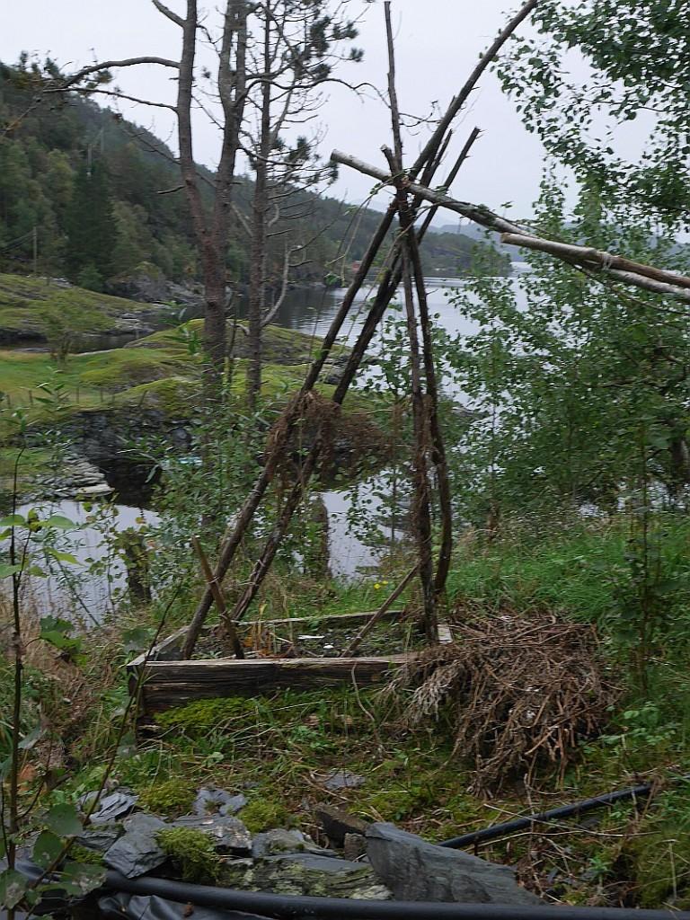 Åse's Hablitzia tamnoides had died back!