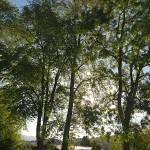 Røra station garden