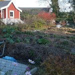 A lot of work has gone into developing the garden with masses of organic matter...