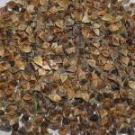Buckwheat / bokhvete