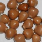 Staphylea pinnata, Bladder nut
