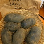 "Francesca Bolgar commented: Spelling is ""Moeraki"" - up the Otago Coast. These are large purple potatoes"