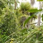 Diversity, including hops climbing into native trees