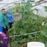Ludwig and Suzanne wrote an article about their brilliant polytunnel in Permaculture Magazine, in particular their simple water harvesting and hydroponic system. See   https://www.permaculture.co.uk/articles/how-design-and-build-self-watering-polytunnel