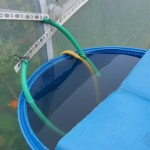 Harvesting rainwater :)