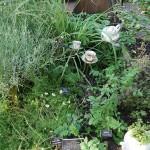 Tea plants ;)