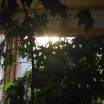 Sunrise through my indoors forest garden!