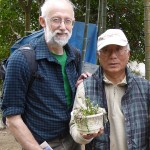 Me, the owner and the white-flowered dandelion (Taraxacum albidum)