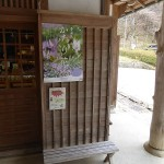 Katakuri poster at the museum entrance