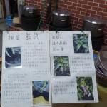 Japanese Indigo (Polygonum tinctorium / Persicaria tinctoria)