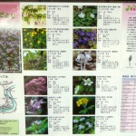 On our host's wall was a poster of wild flowers on the mountain where we had botanised :)