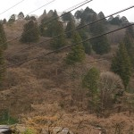 Mt. Iimoriyama (254m), the maples for which this place is famous in autumn (next picture) are not yet in leaf!