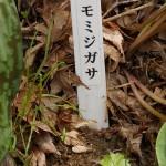 Cacalia delphinifolia (shidoke) sign