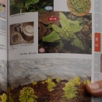 Petasites japonica in our foraging book!