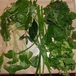 Wild foraged Mewagissey edibles, including Alexanders, Navelwort, Ground Elder, Allium triquetrum, wild fennel, nettles, Bay leaf from garden, Campanula spp. and dandelion