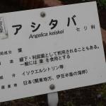 In the Tokyo Metropolitan Medicinal Plant Garden