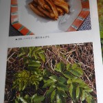 "Also from my foraging book, pictures of Angelica japonica, hamaudo with, above ""Kinpira of hamaudo's roots"". My friend Ken tells me that ""Kinpira is normally a well known ""grandma-recipe"" using Gobo (Burdock:Arctium lappa)."""
