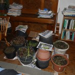 Forcing pots in the living room