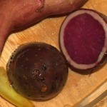 One of 6 potatoes used in the salads (cooked), this is the red-fleshed variety Highland Red Burgundy