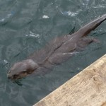 ..and there was even a River Otter...