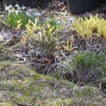 Perennial onions and day lilies