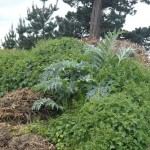 Cardoon and nettle infested compost heap :) I teached TIm how to eat raw nettle ;)