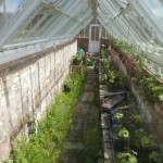 The greenhouse...