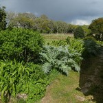 Edimental border with cardoons and day lilies!