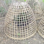 Baskets for protecting young plants against woodpigeons