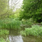 The Flood Meadows in Alton where watercress had been cultivated in the past