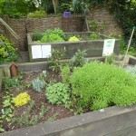 A little herb garden!