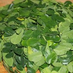 Leaves to be used in a lentil-Moringa curry!