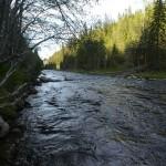 Homla river