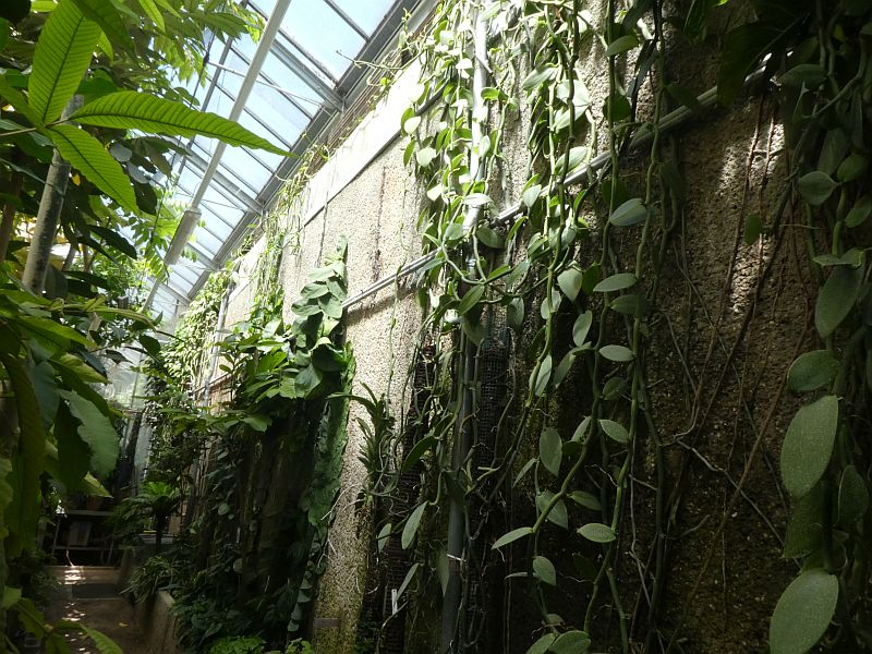I was given a tour of the greenhouses by Frank who was also a member of Arche Noah! This included a collection of vanilla species...
