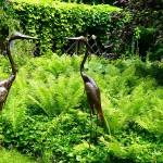 Ostrich Fern...strange looking ostriches