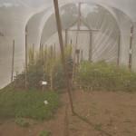 Isolation tent!