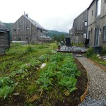 t's like a dream come true wandering around the Ecovillage at Hurdal with veggies everywhere!
