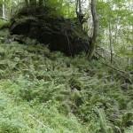Ostrich fern (strutseving)