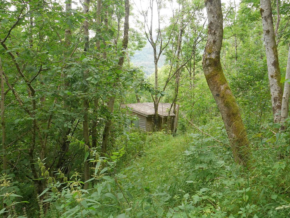 Eirik and Hege's tree house (I stayed there on my first visit - Perennialen I)