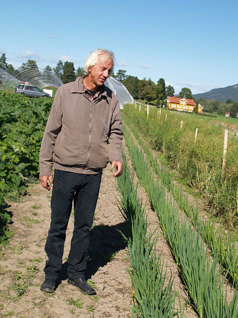 Tom Harald Eckell and (WOW WOW WOW) a long row of welsh onions!/pipeløk. Fantastic! My mind is truly blown by what this man does!